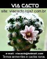Loja ViaCacto